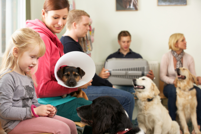 Busy Waiting Room In Veterinary Surgery With People Holding Their Pets